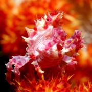 Macro species in Tulamben thumbnail