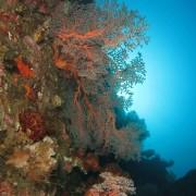 Corals in Tulamben thumbnail