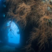 Diving on the USAT Liberty Shipwreck in Tulamben, Bali thumbnail