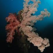 Soft Corals in Tulamben, Bali thumbnail