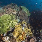 Hard Corals in Canyon, Tulamben thumbnail
