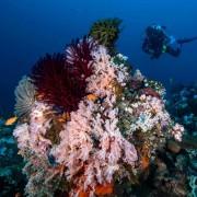 Incredible Coral diversity in Tulamben, Bali thumbnail
