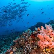 Biodiversity in Bali Manta Point, Nusa Lembongan thumbnail