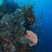 Biodiversity in Eels Garden, Menjangan thumbnail