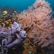 Biodiversity in Lipah Bay, Amed, Bali thumbnail