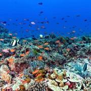 Biodiversity in Toyapakeh, Nusa Lembongan thumbnail