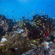 Biodiversity of Cave Point in Menjangan Marine Park thumbnail