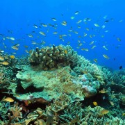 Biodiversity of Deep Blue, Amed, Bali thumbnail