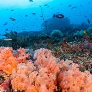 Biodiversity of Pura PED dive site in Nusa Lembongan thumbnail