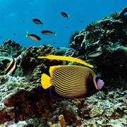Buyuk-reef thumbnail