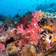 Colourful corals in Bali Manta Point, Nusa Penida thumbnail