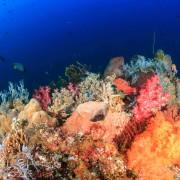 Coral diversity in Karang Sari, Nusa Penida thumbnail