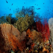 Coral-diversity-Pemuteran thumbnail