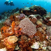 Coral floors in Crystal Bay, Nusa Lembongan thumbnail