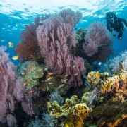 Coral hill in Eels Garden, Menjangan thumbnail