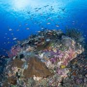 Corals and fishes in Gili Selang Bay thumbnail