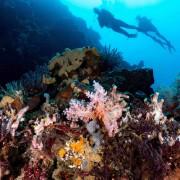 Dive in Blue Corner, Nusa Lembongan thumbnail