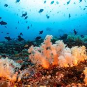 Dive in Nusa Lembongan thumbnail