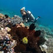 Dive in POS 2, Menjangan Marine Park thumbnail