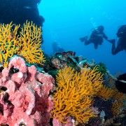 Dive in Pura Mas Gading, Nusa Lembongan thumbnail