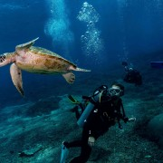 Dive with Sea Turtle in Nusa Penida thumbnail