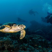 Dive with Sea Turtle in Sampalan, Nusa Penida thumbnail