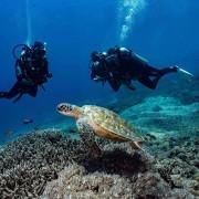 Dive with Sea Turtles in Mangrove, Nusa Lembongan thumbnail