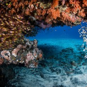 Diving-Safari-in-Tulamben-with-Dive-Concepts thumbnail