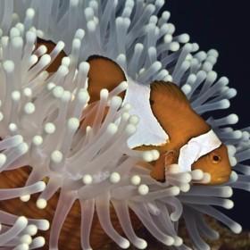 Finding-Nemo-in-Tulamben thumbnail