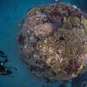 Go dive in Crystal Bay, Nusa Penida thumbnail