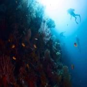 Go diving in Bat Cave, Menjangan Marine Park thumbnail