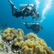 Go diving in Eels Garden, Menjangan thumbnail