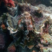Hard Coral in Bat Cave, Menjangan Marine Park thumbnail