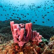 Hard corals in Kusambi, Amed, Bali thumbnail
