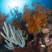 Huge coral diversity in Menjangan Marine Park thumbnail