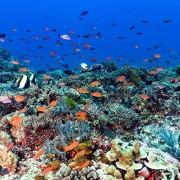 Karang-sari-reef thumbnail