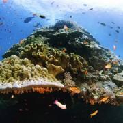 Magneficent Coral Rock in Crystal Bay, Nusa Lembongan thumbnail