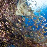 Marine life in Gili Selang Bay, Amed, Bali thumbnail