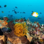 Marine Life in Pontoon, Nusa Lembongan thumbnail