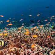 Marine Life in Sampalan, Nusa Penida thumbnail