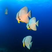 Marine Life in SD, Nusa Lembongan thumbnail