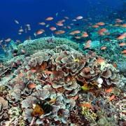 Marine Life in Toyapakeh, Nusa Lembongan thumbnail
