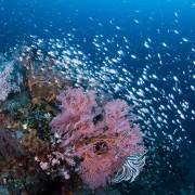 Marine Life in Tulamben thumbnail
