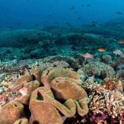 Ocean Floors in Sampalan, Nusa Penida thumbnail