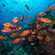 School of Blotcheye Soliderfish in Bunutan, Bali thumbnail