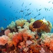 Soft coral in Nusa Lembongan thumbnail
