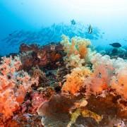 Soft Corals in Toyapakeh, Nusa Lembongan thumbnail