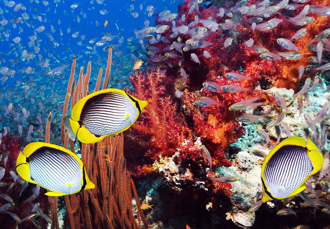 Discover Scuba Diving Day Trip to Amed