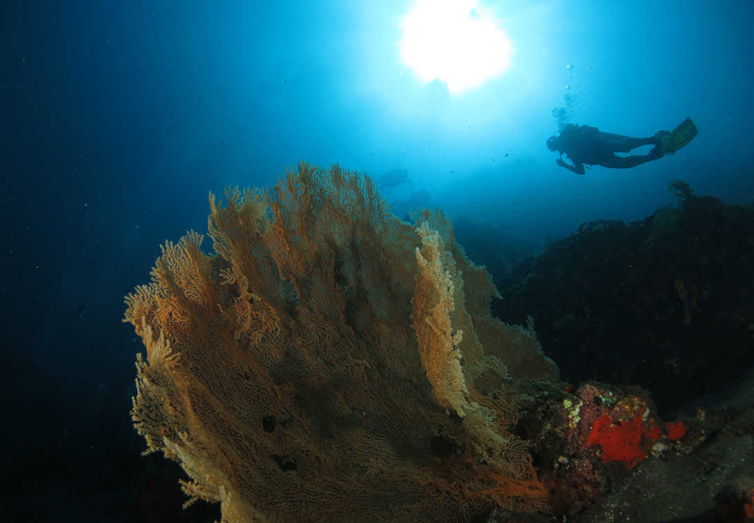 Pack 3 Fun Dives in Amed