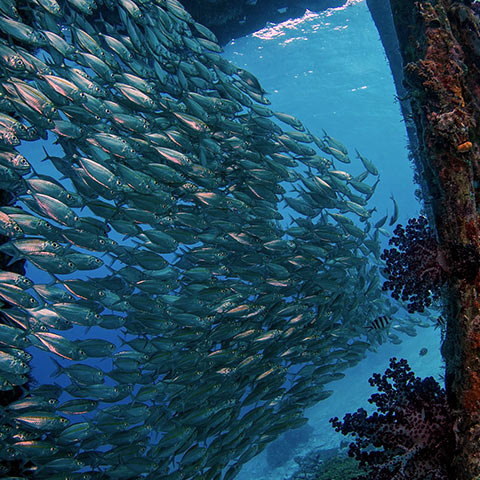 A Lot of Life Below the Jetty
